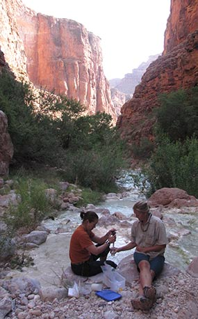 Late in the afternoon. Two biologists are sitting in the foreground taking a water sample. Behind them is the blue-green water of Havasu Creek. In the background canyon cliffs are partially in shade and partially in sunlight.