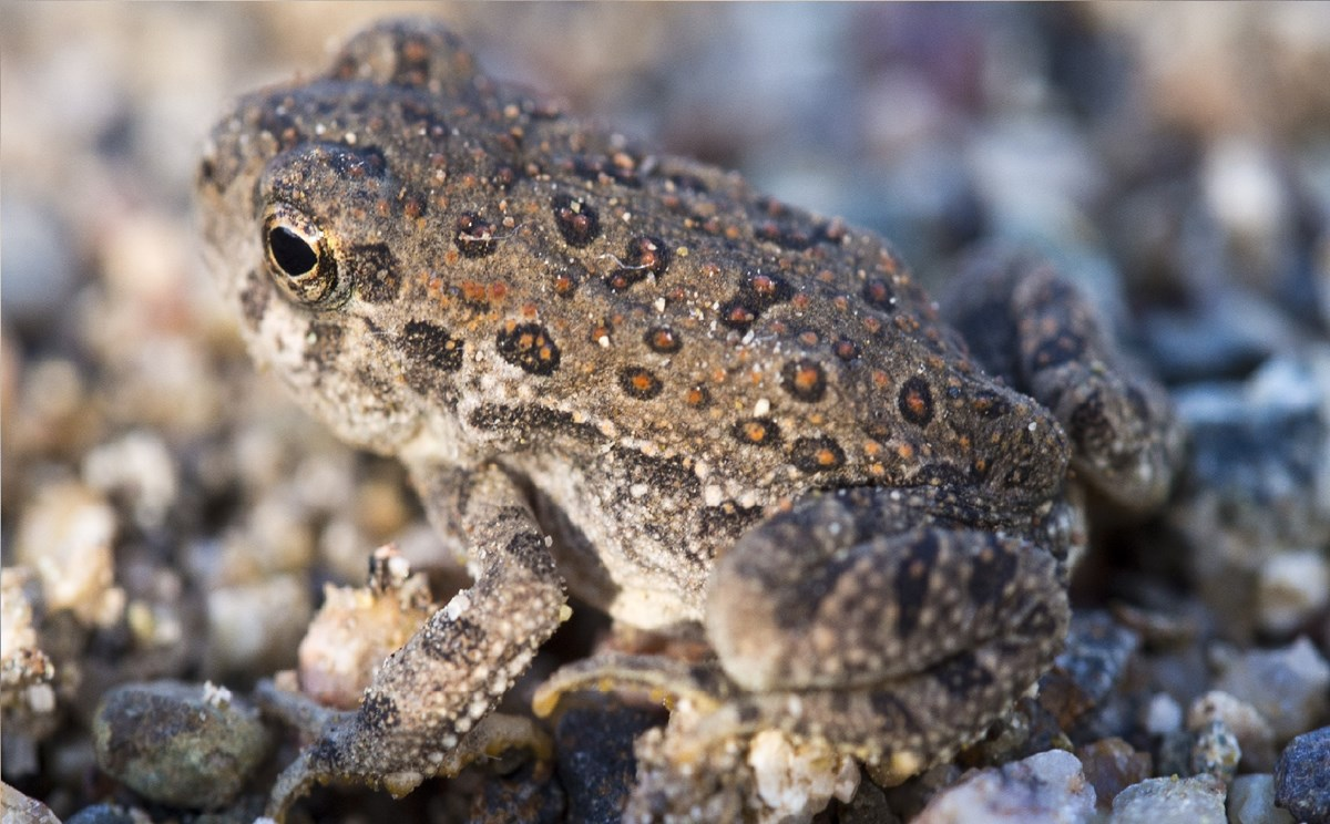 Toad with red spots