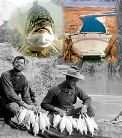 Trout - AZ Game and fish, Glen Canyon Dam - BOR, 2 men with string of chub 1911, Rust Collection
