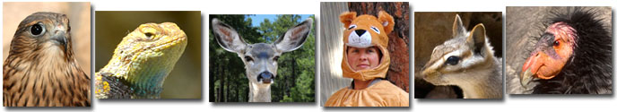 Animal collage showing small portraits of a falcon, lizzard, mule deer, person in lion costume, chipmunk, CA Condor