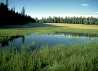 Montane meadow with subalpine grassland
