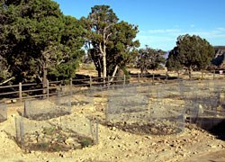 Revegetation of Maricopa Point Parking Lot.