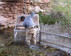 Biologist operating the weir in Bright Angel Creek.