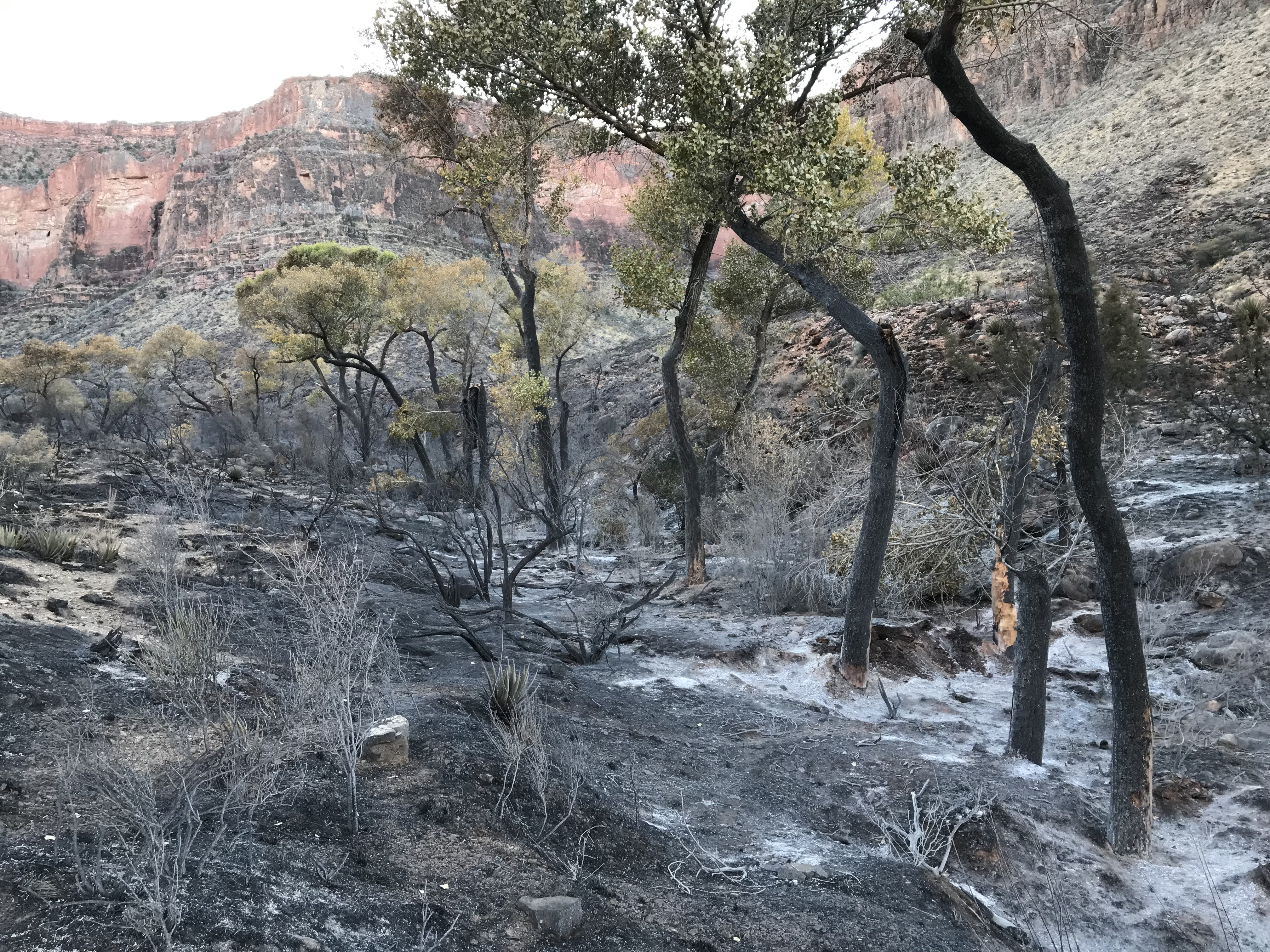 Burned area of Cottonwood Creek with black fire scar.