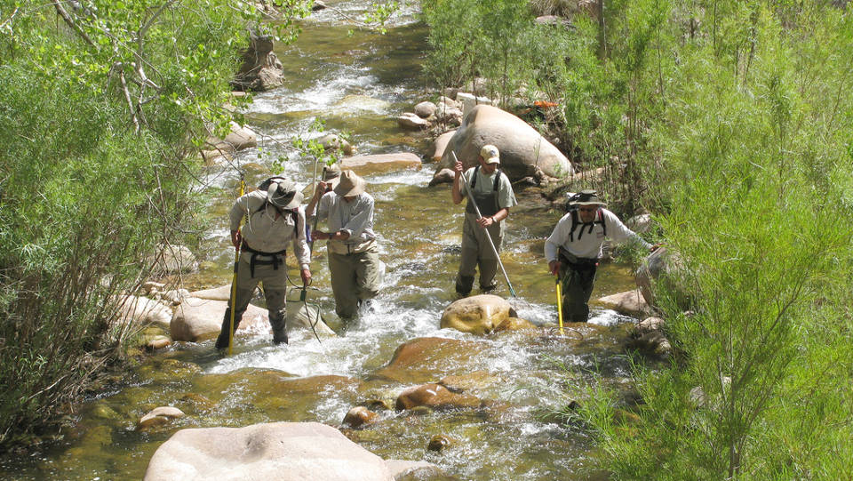 Four people wearing waders and hats and carrying poles, are standing in a creek
