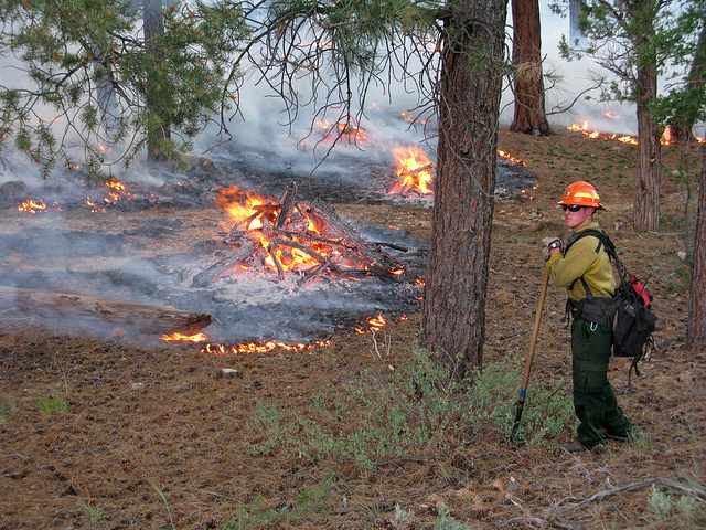 Firefighter on a prescribed burn