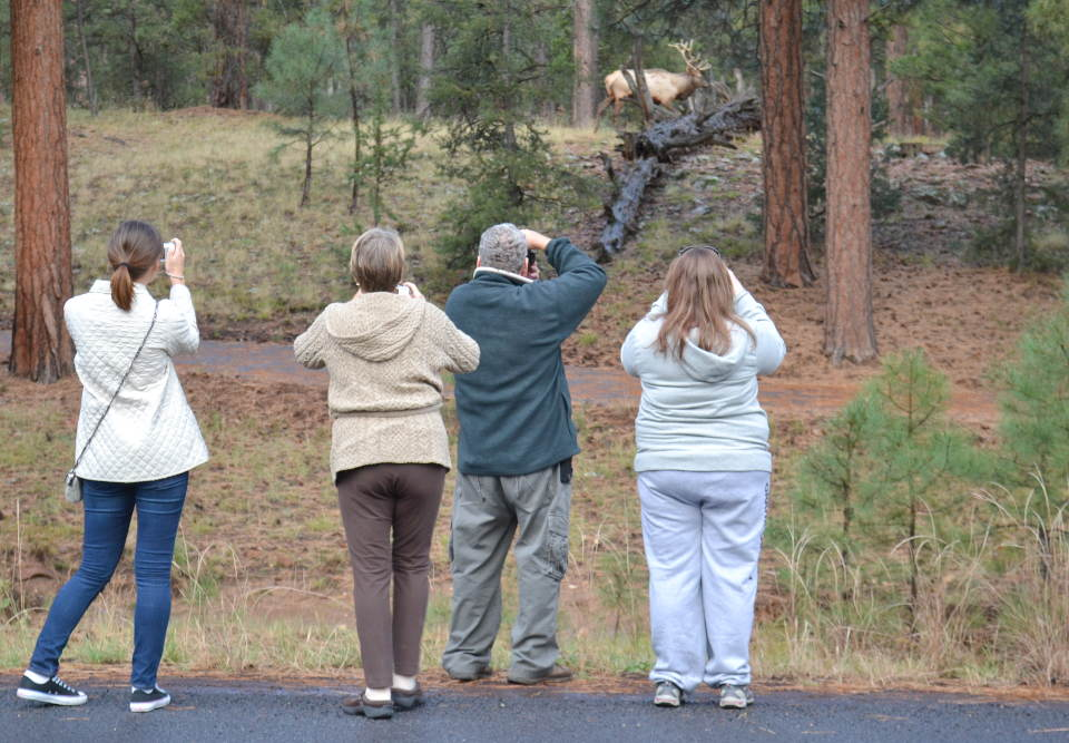 four people standing on a footpath, taking photos of a bull elk on a hill off in the distance.