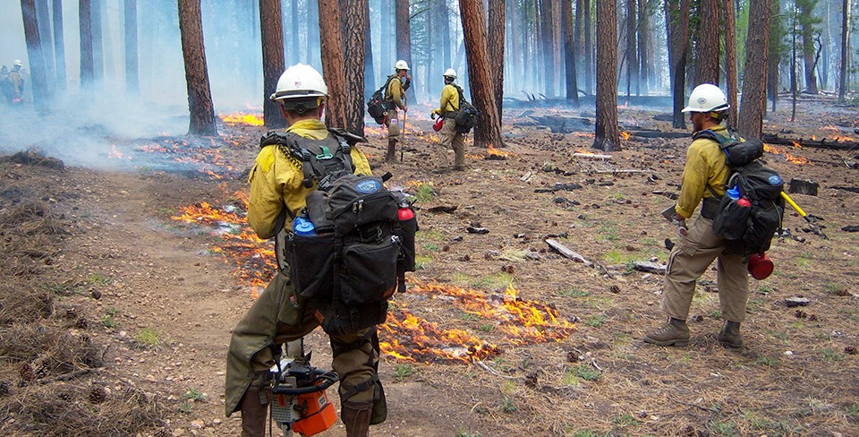 NPS firefighters stand in front of several small burning piles of woody debris in a pine forest.