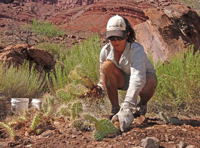 vegetation work in Grand Canyon