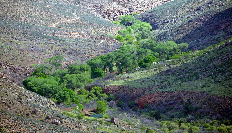 a riparian area with tall trees meandering through a ravine with desert land on either side.