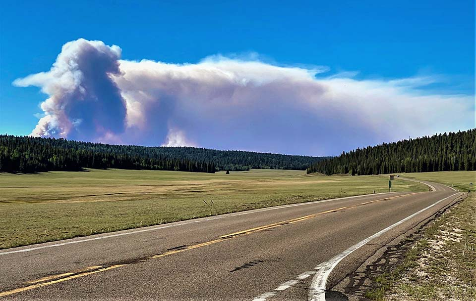 Looking down a two lane road through and open park surrounded by forest with a column of smoke from a wildfire in the distance.