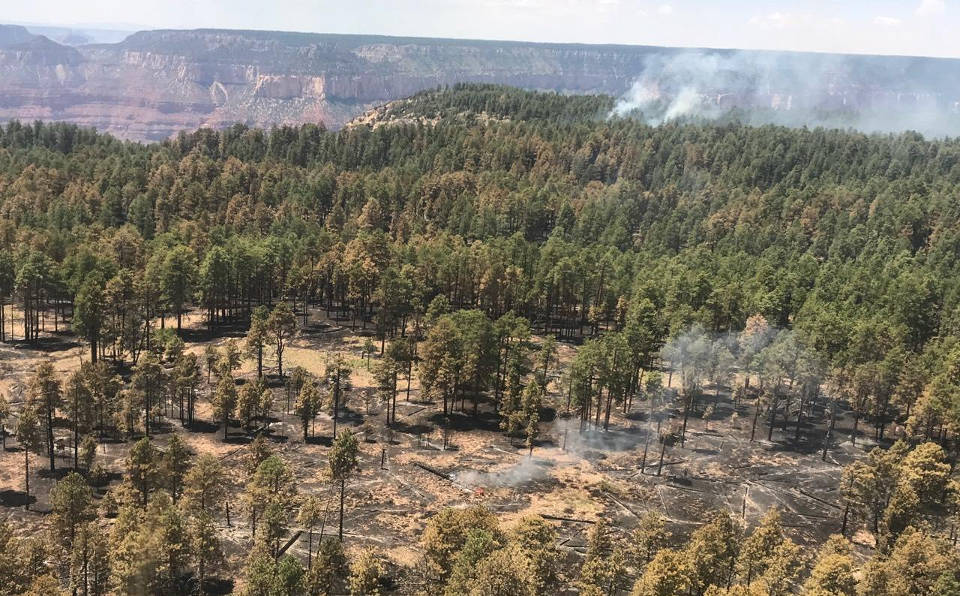 aerial view of a forested area with smoldering, blackened areas on the ground from a recent fire. In the distance, several white plumes of smoke.