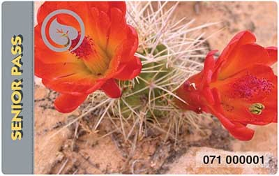Two red and orange cactus flowers extending out of a green and thorn-covered cactus plant that is growing in sand.