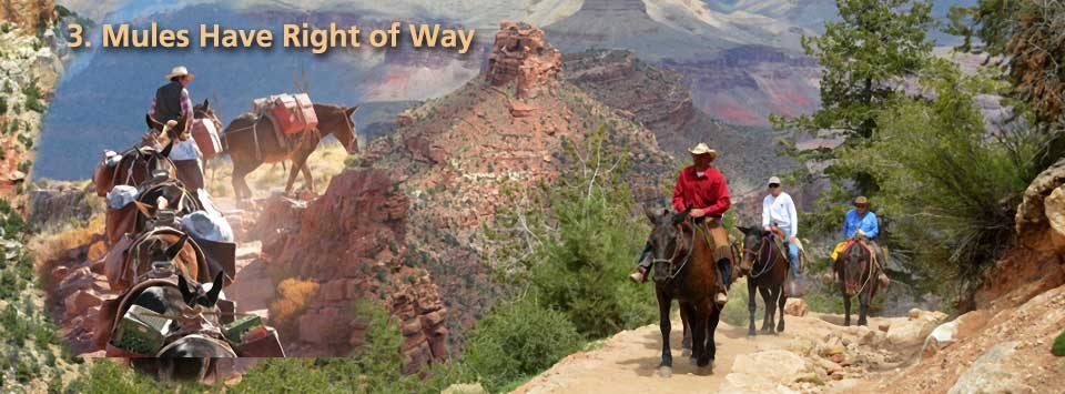 Mules have right of way. Photo split in two halves. Left shows a string of loaded pack mules ascending a trail. Right shows three people riding mules.