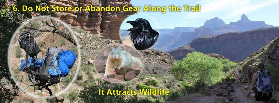 Do not store or abandon gear along the trail. It attracts animals. On the left, three inserts: backpacks hanging from a tree branch, a squirrel and a raven. Background image shows hikers on trail to the right of a riparian area: cottonwood trees.