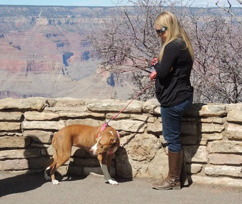 A dog being walked on a leash on pavement behind as stone wall in front of Grand Canyon.