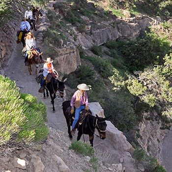 A string of 6 mules in single file on a backcountry trail cut into a cliff face.