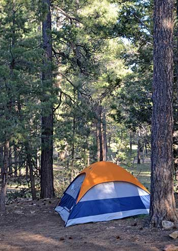 Blue tent with orange fly pitched in one of Mather Campground's sites under tall trees.