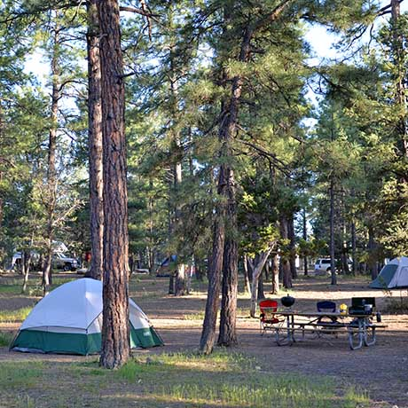 a family campsite underneath tall ponderosa pine trees. a green and white tent on left. Picnic table in a clearing on right.