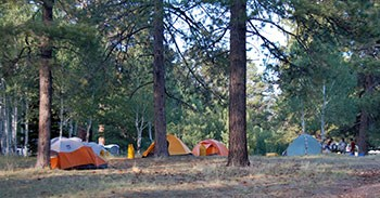 a group campsite with a number of colorful tents under tall pine trees. A group of people are sitting at a picnic table on the far right.
