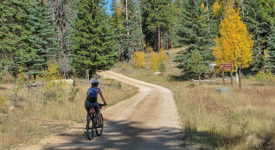 a bicyclist wearing a helmet is starting down a dirt road on the edge of a forest.