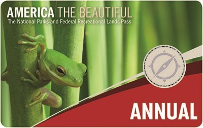 annual pass shows a tiny green frog holding onto and looking around a green plant stem. Additional plant stems make up the background.