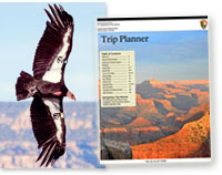 CA condor photo (courtesy of Steve Mull) and cover of Grand Canyon Trip Planner newspaper.