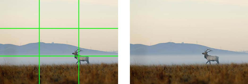 A repeated photo taken from a distance of an elk in a meadow, divided into ninths by green lines