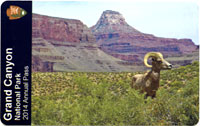 front of 2014 Grand Canyon National Park Annual Pass with bighorn sheep standing in front of rock formations.