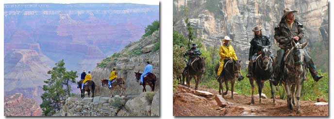 Mule Trips in Grand Canyon: South Rim (right) North Rim (left)
