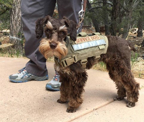 Pets - Grand Canyon National Park (U S  National Park Service)