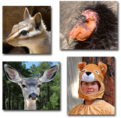 photos of a condor, a deer, a chipmunk and a woman in a lion suit.