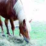 a picture of a horse at Oxon Hill Farm, one of the sites of NCP East