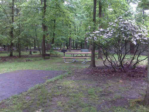 A campsite in the Greenbelt Park campground
