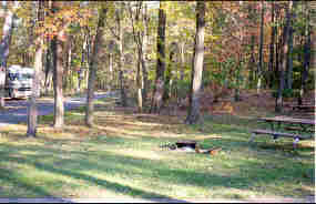 a picture of a campsite in the Greenbelt Park campground