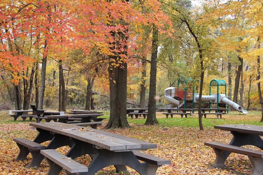 Fall colors in the Sweetgum Picnic Area