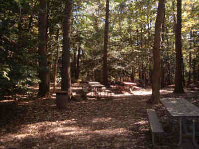 picnic tables and trees in the Holly Picnic Area