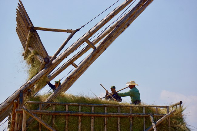 Workers use pitchforks to evenly place new load of hay on top of loose haystack.