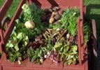 A wooden cart filled with produce from the kitchen gardens so important to winter survival for fur trade families.