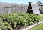 potato beds in the kitchen gardens