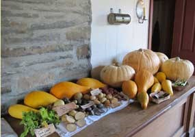 squash, bean and potato harvest