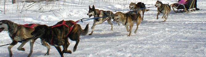 Dogs running in a race.