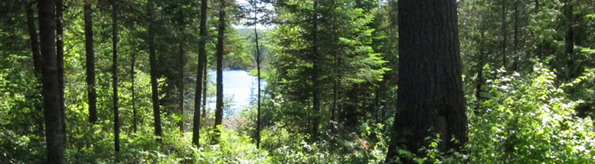A body of water visible through dense forest.