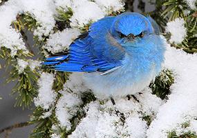 Birds Great Sand Dunes National Park Amp Preserve U S