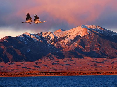 Pair of sandhill cranes over San Luis Lakes with Dunes and Mountain in backgrouind
