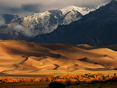 Gold cottonwood trees, dunes, and snowcapped mountain