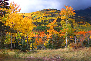 Fall colors on Medano Pass