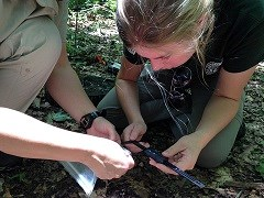 Measuring Salamanders