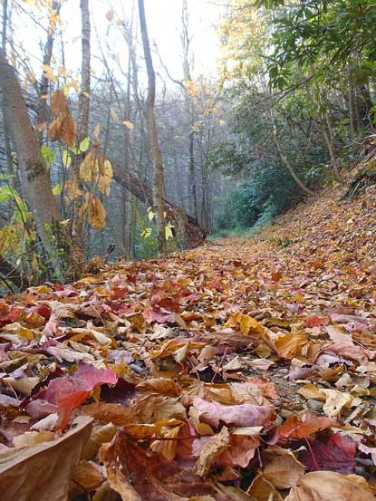 Leaves cover the ground on high elevation trails this week