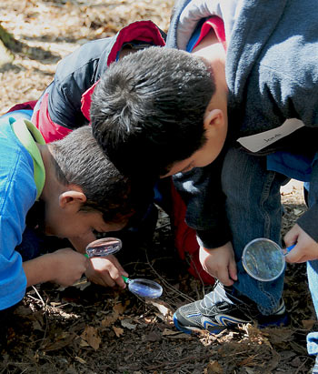 Three young boys use magnifying glasses to examine leaf litter